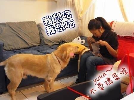 店狗YUKA-最近很愛撒嬌