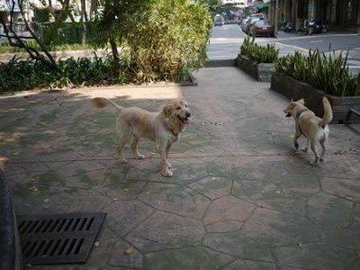 店狗Yuka的狗麻吉-布丁