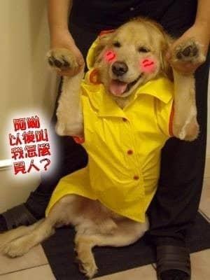 店狗身世-Yuka五歲生日快樂
