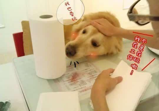 狗店長-卡哥一天的工作生活