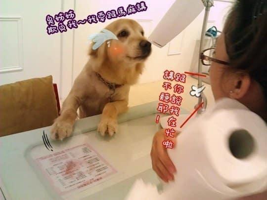 狗狗日記-店長卡哥一天的工作生活
