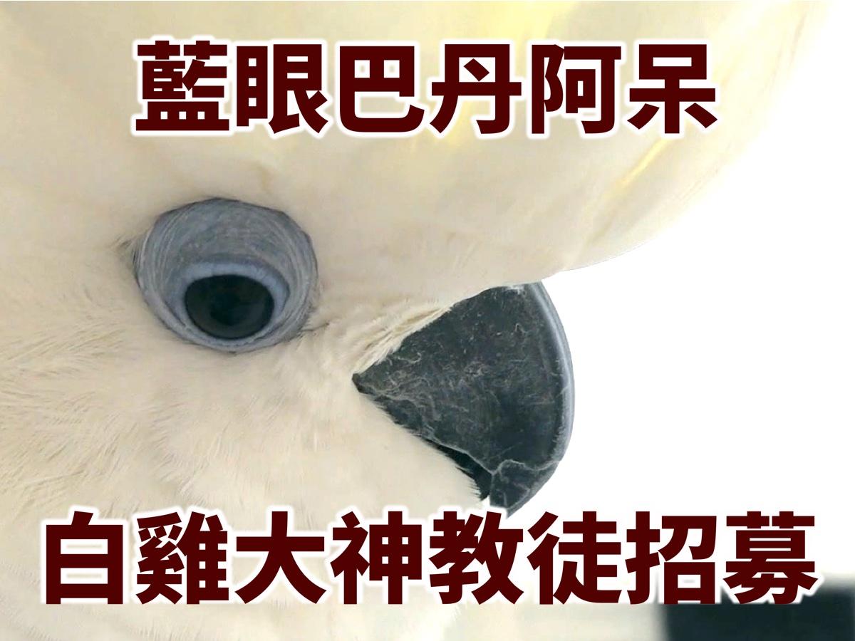 指甲店日常-藍眼巴丹阿呆 白雞大神教徒招募