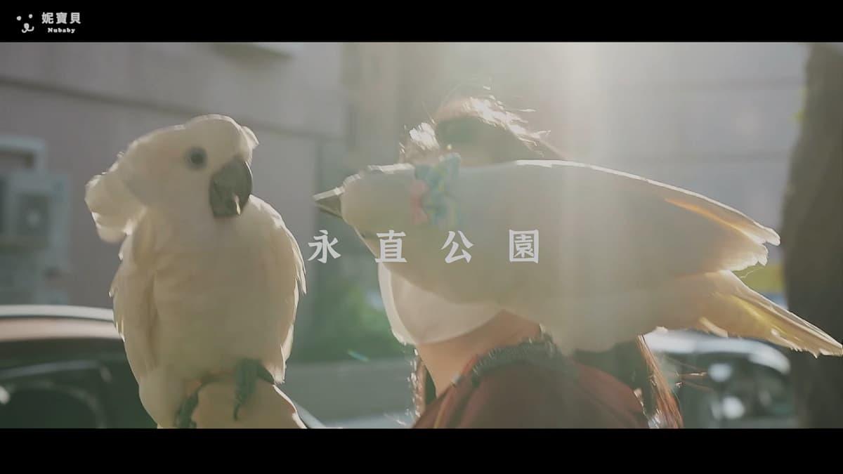 新年走春遛鳥 藍眼巴丹鸚鵡 春節大直追陽光